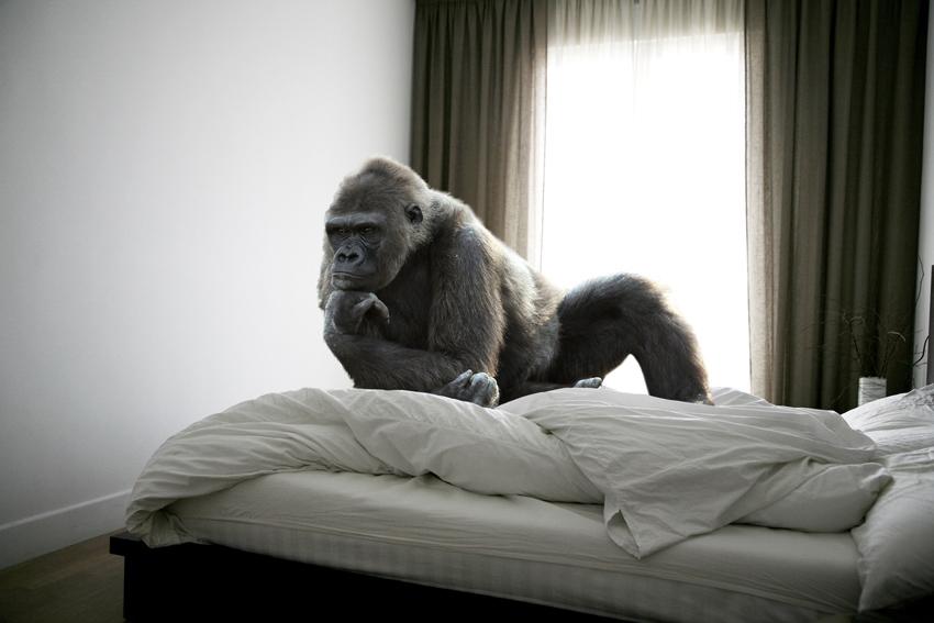 photography-inspiration-mikel-uribetxeberria-animal