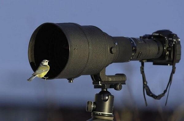 bird in the lense