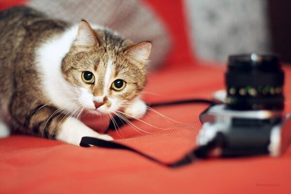 cat and a camera