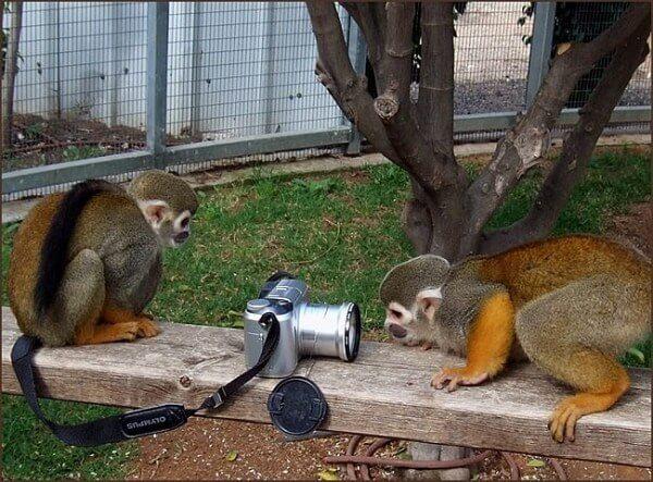 monkeys exploring camera
