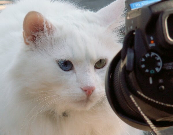cat in front of a camera