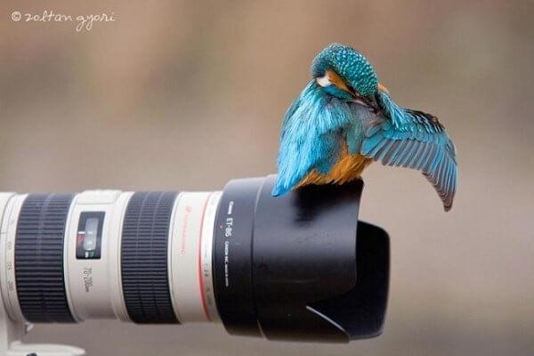bird on a camera lense