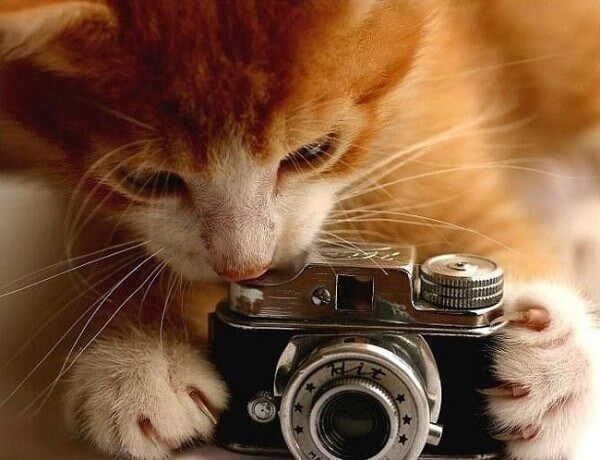 cat taking a picture of you