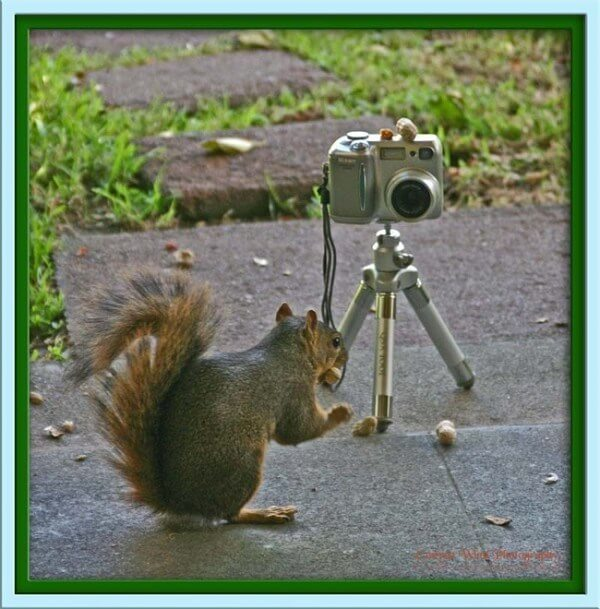 squirrel posing for a picture