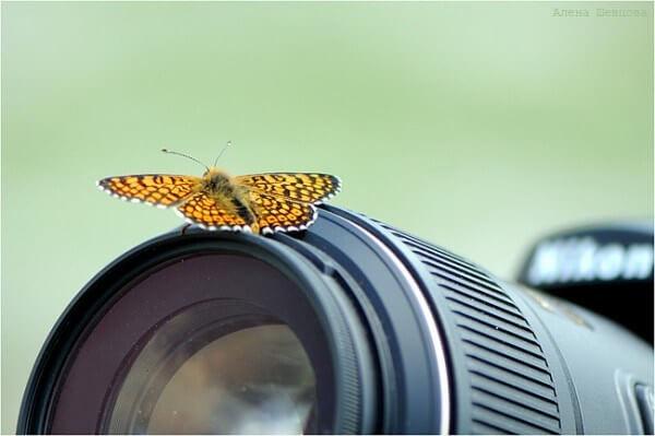 butterfly on a camera